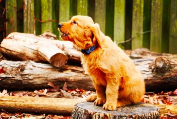 3 Signs You're Barking Up the Wrong Tree with Your Marketing |